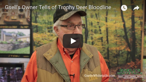 trophy deer bloodline