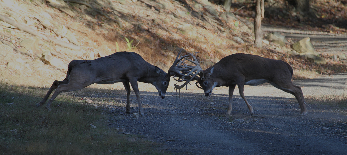 Gsell's Trophy Whitetail Deer Hunts