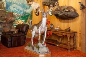 B&B Taxidermy