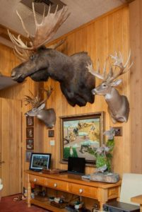 BB Taxidermy